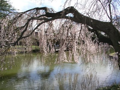 cherry-pond.jpg