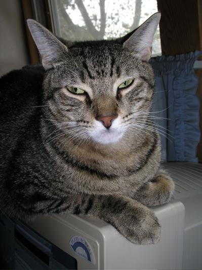 kittenmonitor.jpg